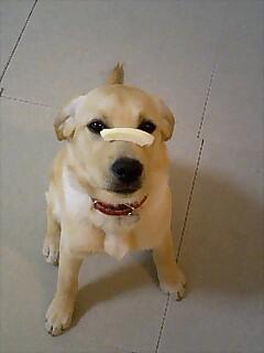 米ぬかベーグル