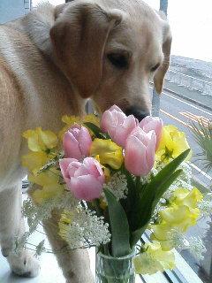 お花もらいました